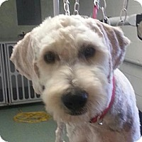 Adopt A Pet :: Ranger - Brattleboro, VT