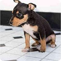 Adopt A Pet :: Reagan - Portland, OR