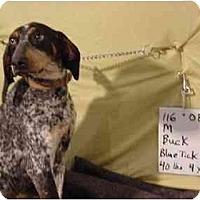 Adopt A Pet :: Buck/Pending - Zanesville, OH