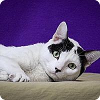 Adopt A Pet :: Stanley - Santa Monica, CA