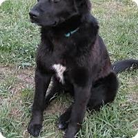 Adopt A Pet :: Bubba - Saskatoon, SK
