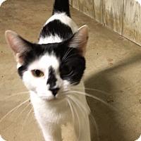 Adopt A Pet :: Indie - Horsham, PA