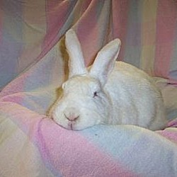 Photo 1 - New Zealand for adoption in Holbrook, New York - Brigit