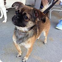 Adopt A Pet :: Bentley - Jacksonville, NC