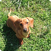 Adopt A Pet :: Arlo - Knoxville, TN
