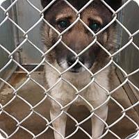Adopt A Pet :: Cortez - Urgent! - Zanesville, OH