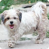 Adopt A Pet :: Max - Norwalk, CT