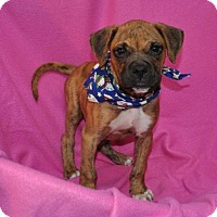 Adopt A Pet :: Lucy - Erwin, TN