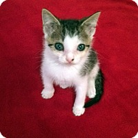 Adopt A Pet :: Pickles - Monroe, NC