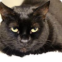 Adopt A Pet :: Spooky - Sarasota, FL