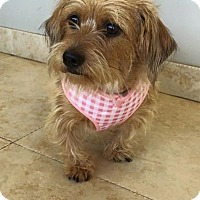 Adopt A Pet :: Julep - Weston, FL