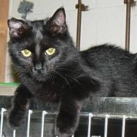 Adopt A Pet :: Silky - Stafford, VA