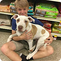 Adopt A Pet :: Louie - Broken Arrow, OK