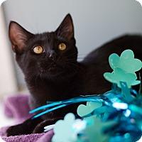 Adopt A Pet :: Velvet - Avon, NY