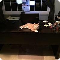 Adopt A Pet :: Oliver - Reston, VA
