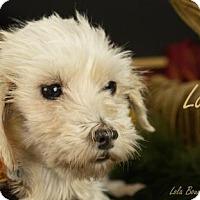 Adopt A Pet :: Lora is Reserved - Kirkland, QC