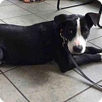 Adopt A Pet :: A406854 - San Antonio, TX
