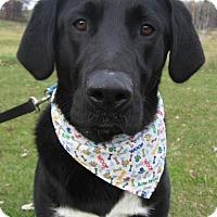 Adopt A Pet :: Casper - Menomonie, WI