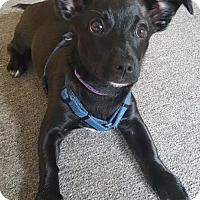 Adopt A Pet :: SKY - Methuen, MA