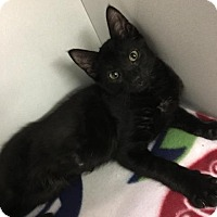 Adopt A Pet :: Stefan - Waverly, NY