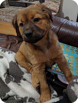 Dog Diggity Rescue Olympia