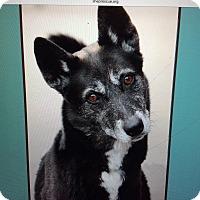 Adopt A Pet :: CYNDER VON CUPID - Los Angeles, CA