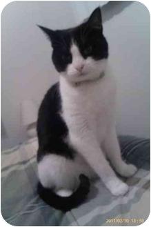 Domestic Shorthair Cat for adoption in Washington Terrace, Utah - Jasmine