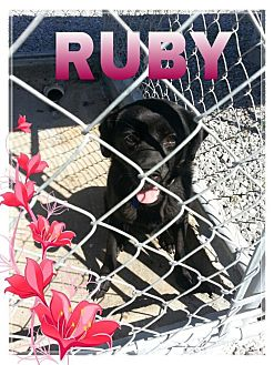 Labrador Retriever Mix Puppy for adoption in Donaldsonville, Louisiana - Ruby