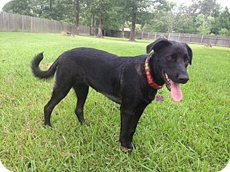 Labrador Retriever Mix Dog for adoption in Richmond, Virginia - Jelly Bean