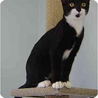 Adopt A Pet :: Fae - Modesto, CA