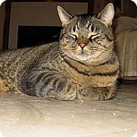 Adopt A Pet :: Hector - Toronto, ON