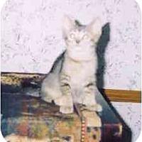 Adopt A Pet :: Kismet - Fayette, MO