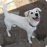 Adopt A Pet :: Mia - Spring, TX