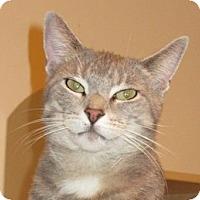Adopt A Pet :: SYLVIA - 2012 - Hamilton, NJ