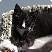 Adopt A Pet :: Zip and Zap - Richmond, VA