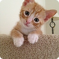 Adopt A Pet :: Colby Jack - Monroe, GA