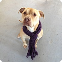 Adopt A Pet :: Cashmire in CT - East Hartford, CT