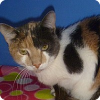 Adopt A Pet :: Patches - Hamburg, NY