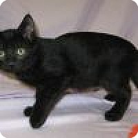 Adopt A Pet :: Perry - Powell, OH