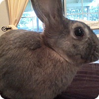Adopt A Pet :: Tad - Watauga, TX