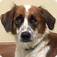 Adopt A Pet :: AUTUMN - Pine Grove, PA