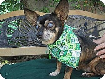 Pekingese/Papillon Mix Dog for adoption in Creston, California - Chloe