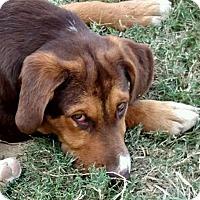 Adopt A Pet :: Malcolm - Preston, CT