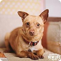 Adopt A Pet :: Tate - Portland, OR