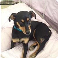 Adopt A Pet :: Miri - Marietta, GA