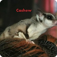 Adopt A Pet :: Cashew - Walker, LA
