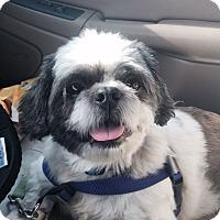Adopt A Pet :: Guy - Huntsville, AL
