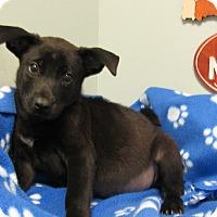 Adopt A Pet :: Asher - Groton, MA