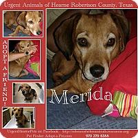 Dachshund Mix Dog for adoption in Hearne, Texas - Merida