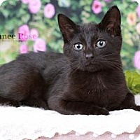 Adopt A Pet :: Abner - Sterling Heights, MI